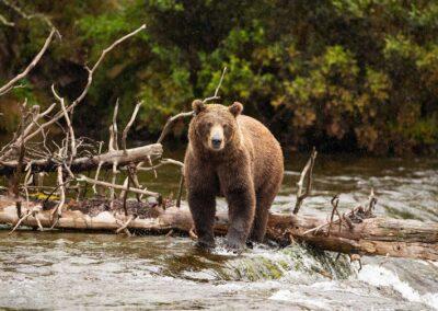 Seasonal Bear & Eagle Viewing Tours