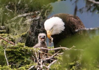 """""""Valley of the Eagles"""" Nature Tour"""
